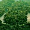 Southern belize rainforest