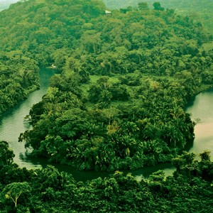 Southern belize rainforest