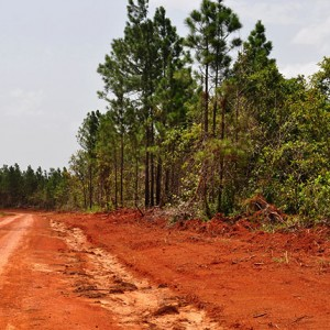 Dirt Road to Mountain Pine Ridge