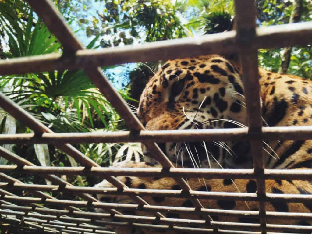Belize Zoo Travel Guide