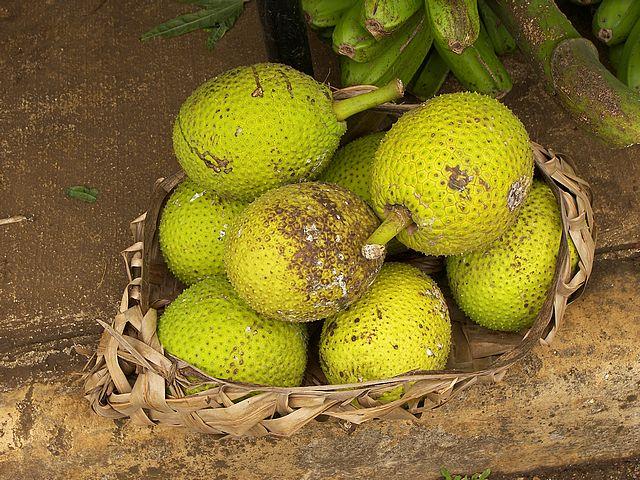 breadfruit in Belize
