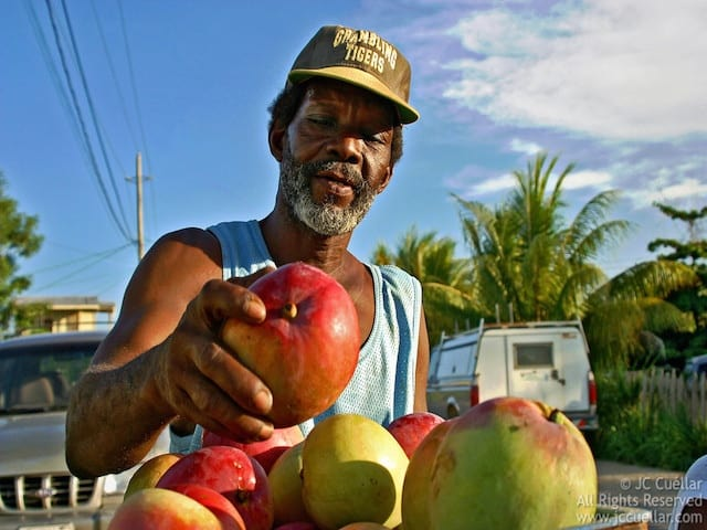 belize mangos