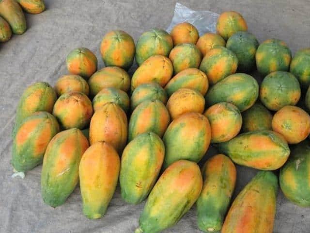 Papaya in Belize