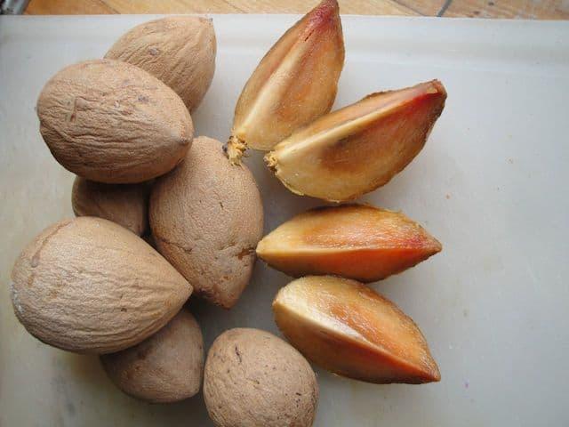 belize sapodilla fruit