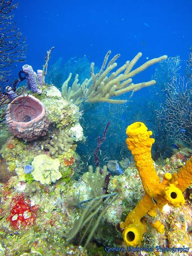 reef and coral at the aquarium