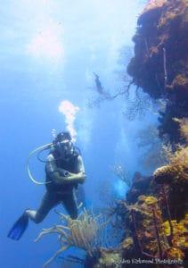 diver at the Aquarium